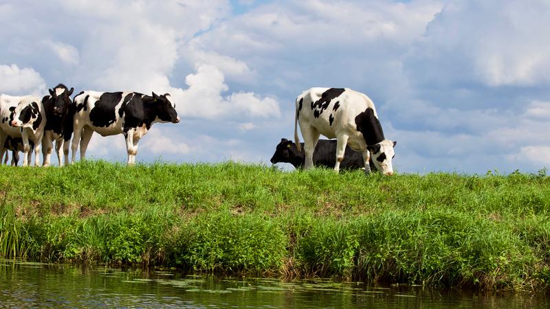 Gliceryna w żywieniu zwierząt