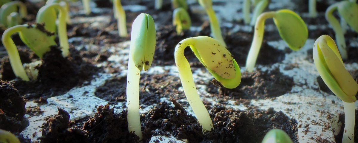 Jak zadbać wiosną o wysokie plony rzepaku i soi