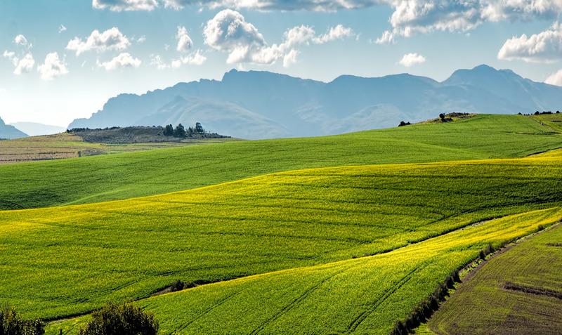 Biopaliwa, biokomponenty - dostawca