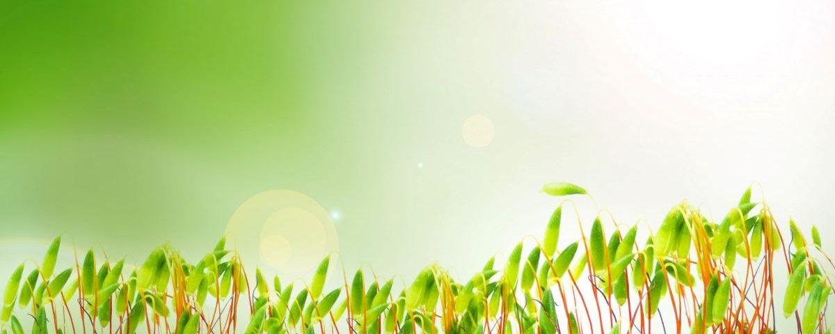 Dotacje na gospodarstwo ekologiczne